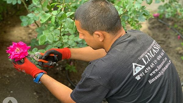 Jardineria en Madrid